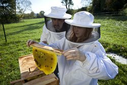 Department chair and student in white bee suits examining a honeycomb