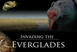 Invading the Everglades