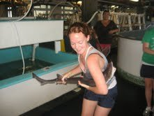 Releasing dogfish at MBL