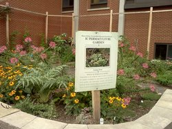 The IC Permaculture Garden