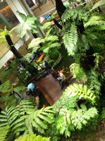 The Singapore airport had a mini jungle with trees, flowers, a pond with fish