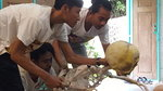 Puppet Theatre tells the story about the Baby Grave Tree in Tana Toraja, Indonesia