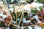 Snow mixes with green plants outdoors