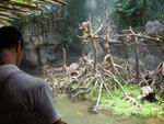 Primates student observing langurs