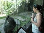 Primates student observing a juvenile gorilla