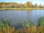 The Ithaca College Wetlands are not intended to be ponds