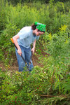 Cutting Invasive Plants