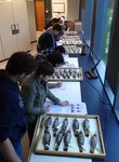 Ornithology students examining flicker hybrids