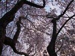 tree in full bloom