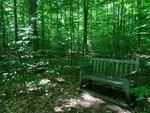 Sapsucker Woods, Ithaca, NY