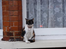 A neighborhood cat near Tooting Broadway just people watching.