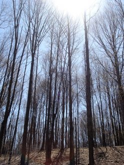 April Afternoon in the Natural Resource Reserve. [Photo Courtesy of Jennifer Chen]
