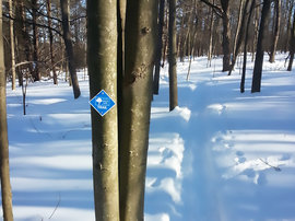 Cross-country ski trail in the IC Natural Lands