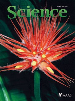 Gurania makoyana on cover of Science