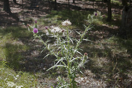 IC Natural Lands are home to variety of unusual plants and animals