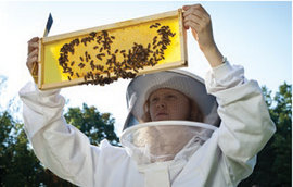 IC Student bee-keeper