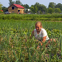 IC intern Drea Kasianchuk '11 works in the onion patch at EcoVillage. Photo by Jeff Goodwin '10
