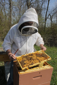 Jason knowledgeably tends to the bees
