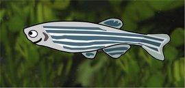 MW_fish