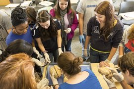 Students study brain anatomy