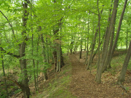 Tutelo Park in Ithaca