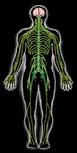 body x-ray