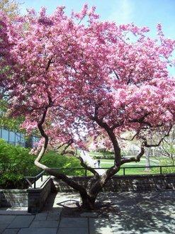 flowering tee