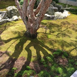 tree and its shadow